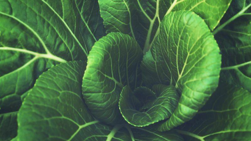 greens-800x450