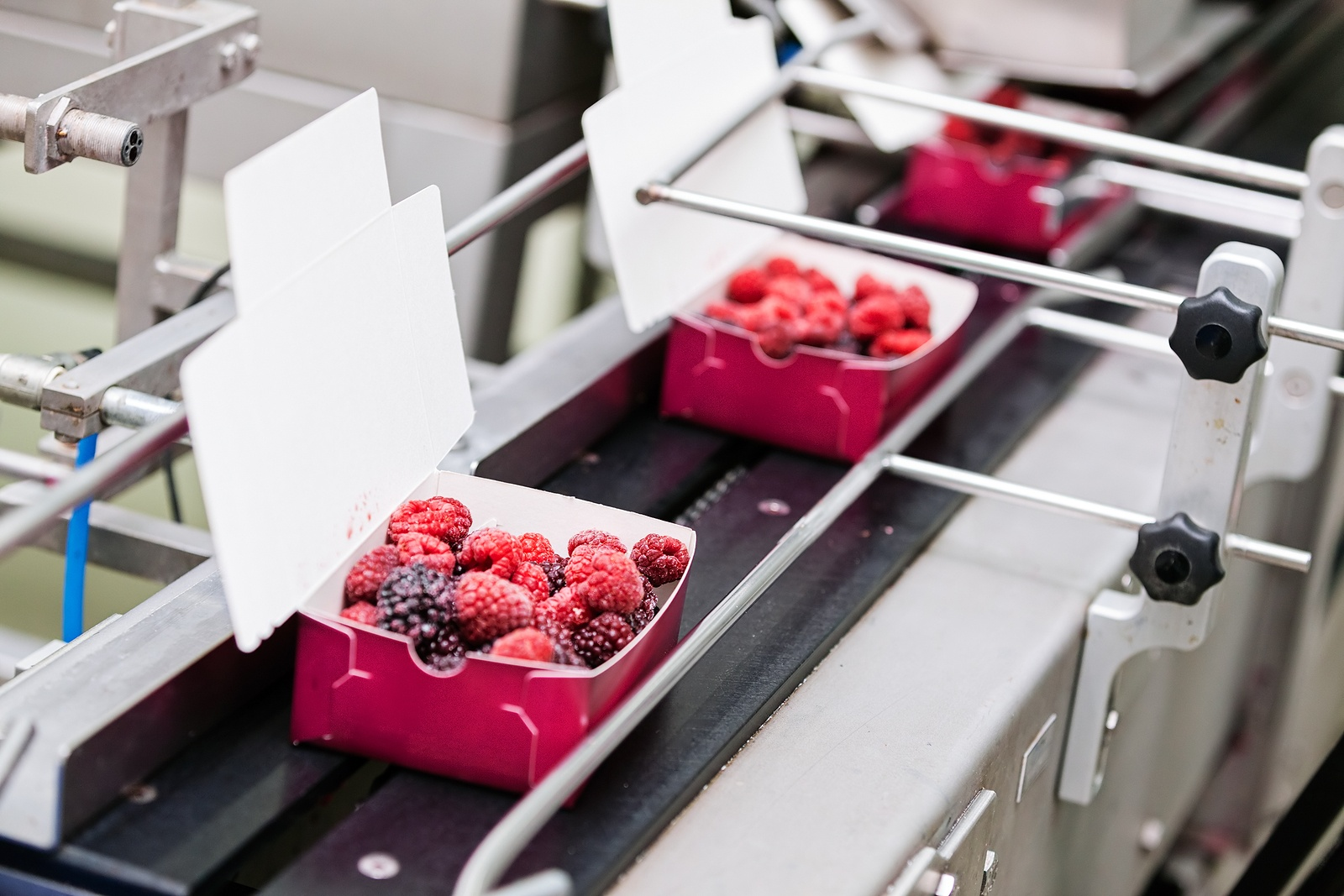 frozen raspberries being packaged