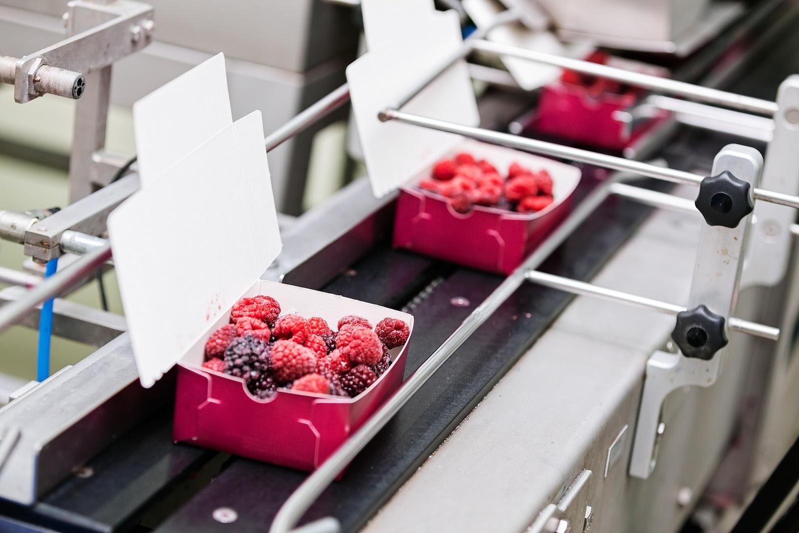 frozen raspberries being packaged